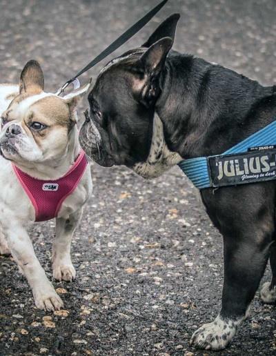 Hundebegegnungen-Workshop