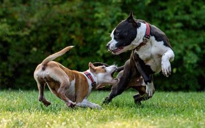 Unerwünschte Hundebegegnungen
