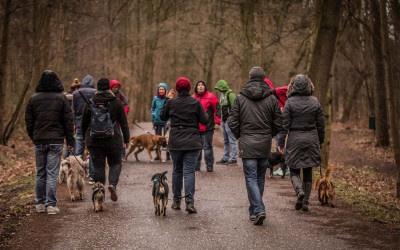 Sozial Walk NEU