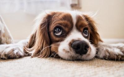 Wie lieb – mein Hund folgt mir überall hin