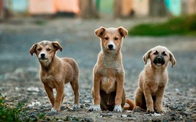 Junghunde Gruppentraining