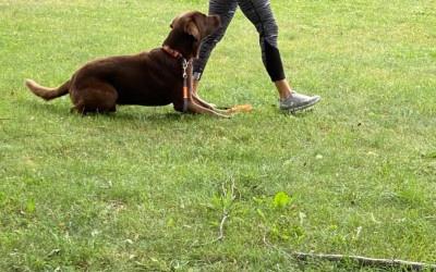 Hundebegegnungen Kurs hat begonnen