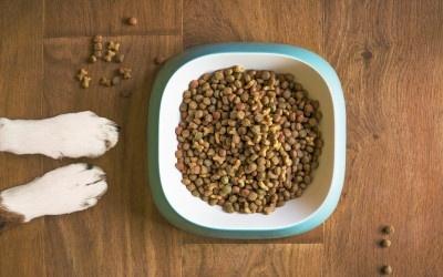 Artgerechte Hundeernährung – Barfen vs. Trockenfutter