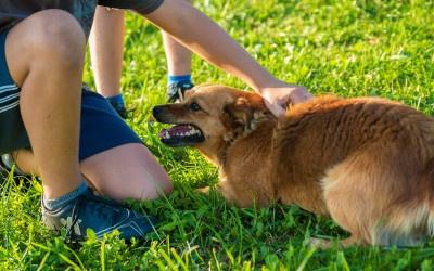 Der Hund springt Besuch an- Freude?